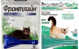 Frontline flea drops for cats