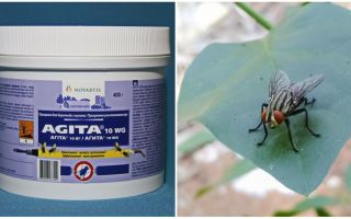 The use of Agita from flies