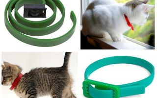 The best flea and tick collars for cats
