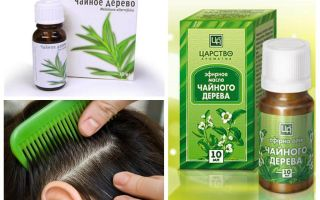 Tea tree oil for lice and nits