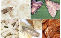 How to bring food moth in the kitchen