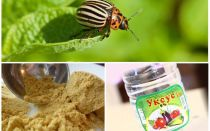 Mustard and vinegar against the Colorado potato beetle: proportions and reviews