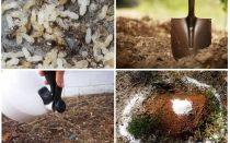 How to get ants out of the garden folk remedies