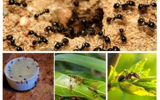 What ants are afraid of