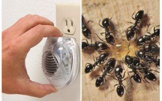 Effective ultrasonic ant repeller