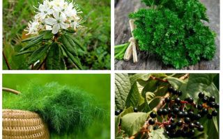 Effective folk remedies for lice and nits