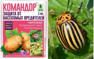 Means the Commander from the Colorado potato beetle