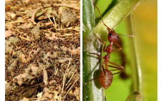What is useful ants