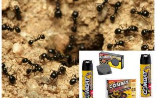 Ant Combat Remedies