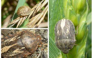 Bug harmful turtle