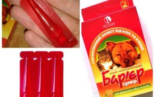 Flea barrier in cats and dogs