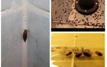 How to deal with wood lice in the bathroom and toilet