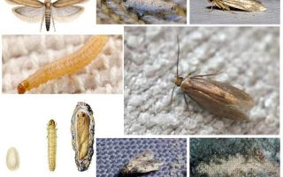 How to deal with moths at home