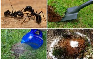 How to get rid of ants in the garden folk remedies