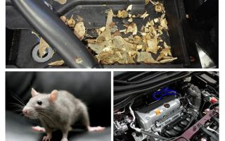 How to get mice out of the car