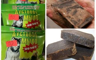 Dustov soap from lice and nits