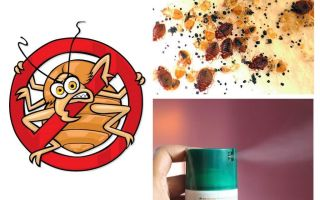 How to get rid of bedbugs in the apartment quickly and permanently