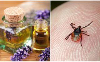 Essential oils against ticks