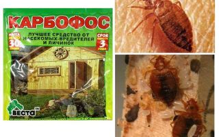 Means Karbofos from bedbugs