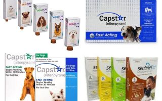 Tablets for fleas and ticks for dogs