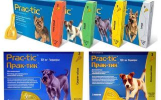 Drops Practices from fleas and ticks for dogs