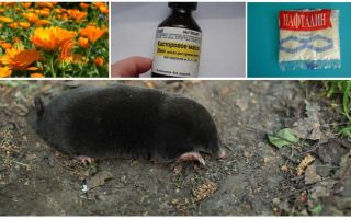 Fighting moles and shrews in the garden