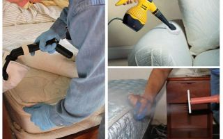 Steam generator from bedbugs