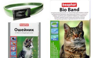 Collar Beafar from fleas for cats and dogs
