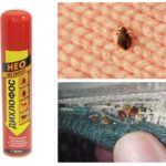Dichlorvos from bedbugs