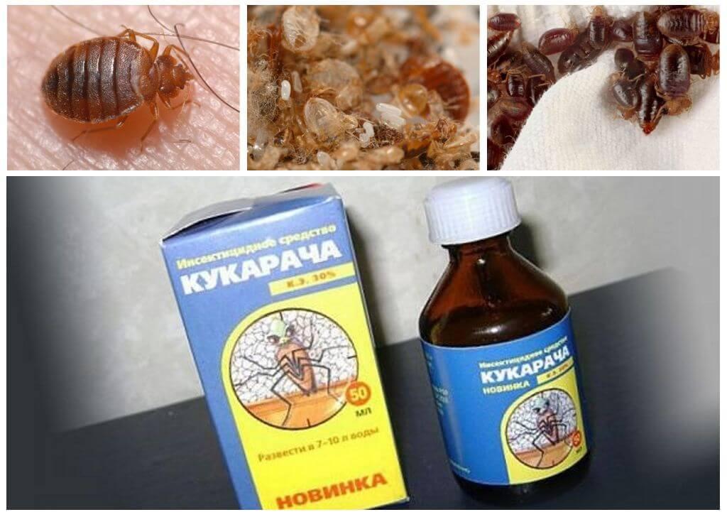 Cucaracha תרופה עבור bedbugs-1