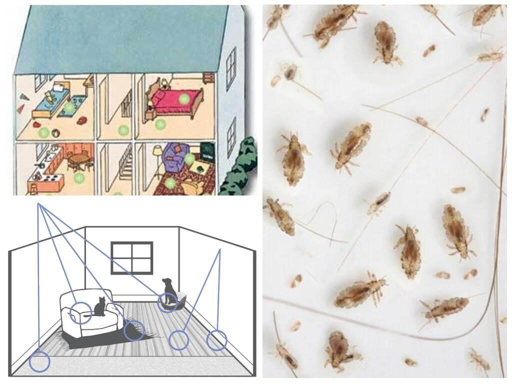 Blusu biotopi mājā