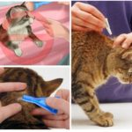 Animal treatment rules