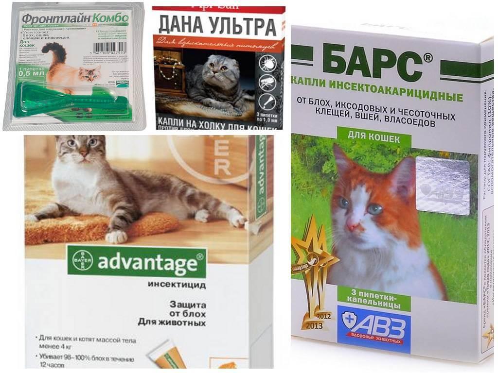 טיפות פרעושים לחתולים - 1
