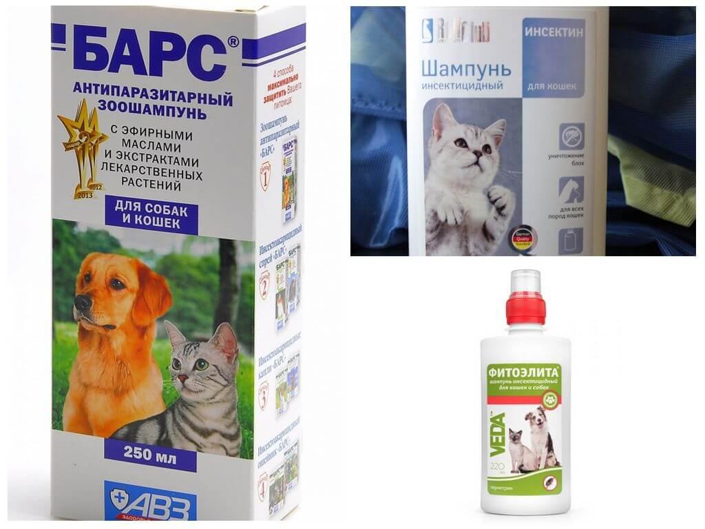 Blusu šampūni kaķiem un suņiem