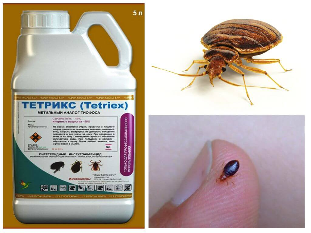 Tetriks no bedbugs
