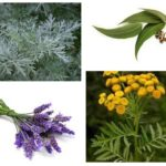 Herbs from fleas