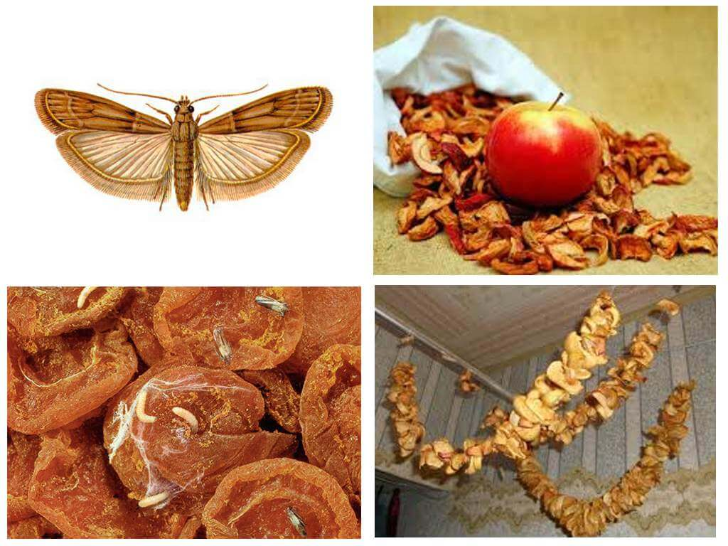Moli žāvētos ābolos