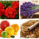 תרופות עממיות עבור עש