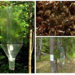 מלכודות חיפושיות לנבוח
