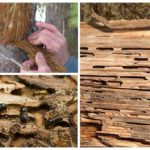 חיפושיות לנבוח