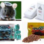 Cīņa pret pelēm