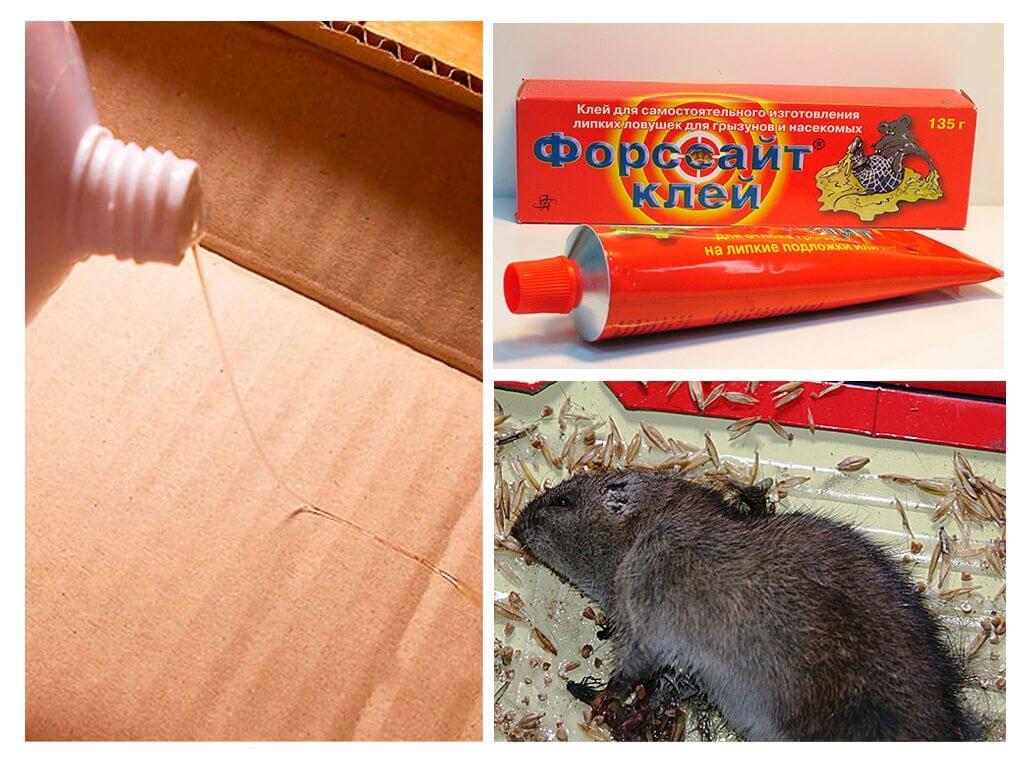 דבק עכברוש
