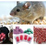 צורות של רעל עכברים
