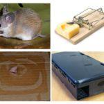 מלכודות עכבר