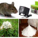 Metodes, kā rīkoties ar pelēm