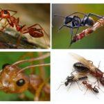 Ant body