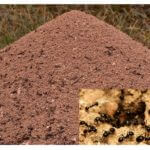 The appearance of the anthill