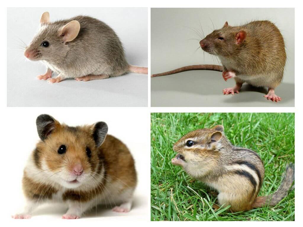 Peles atšķirība no citiem dzīvniekiem
