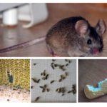 Klātbūtne pelēm dzīvoklī