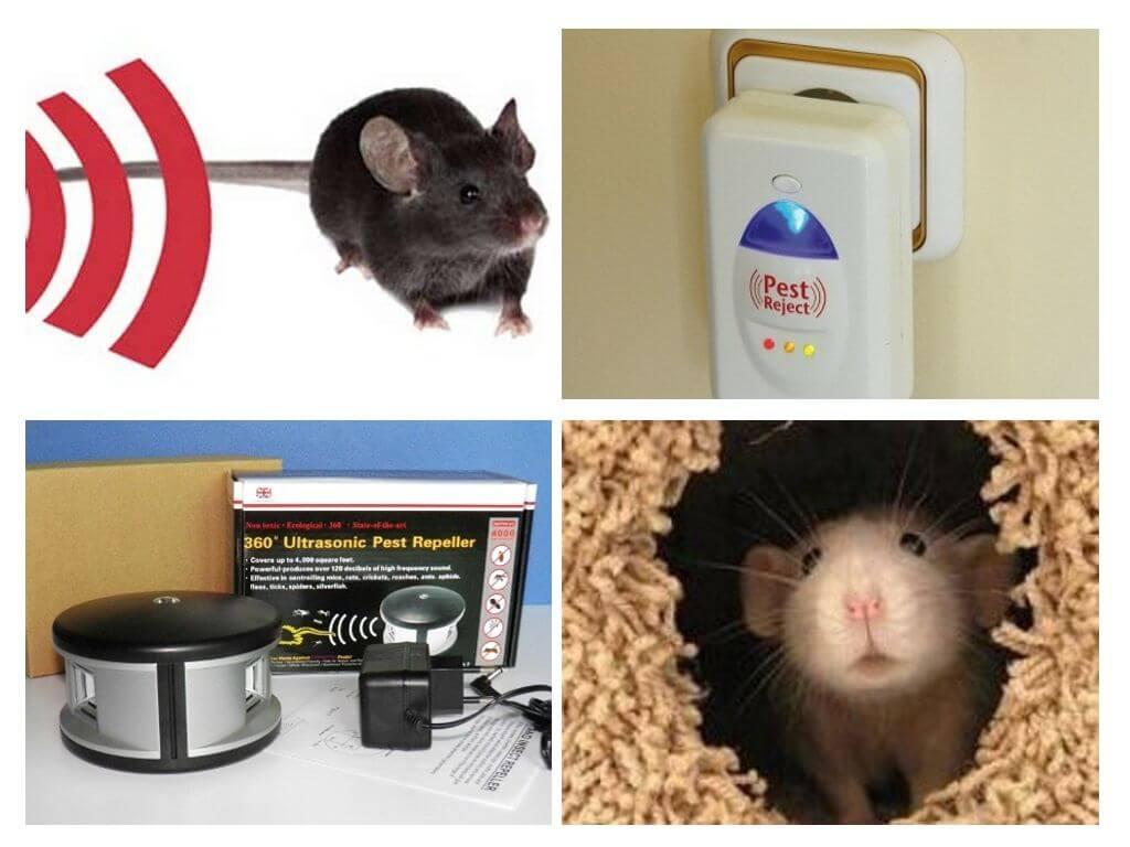 Uzstādiet repelleru no pelēm